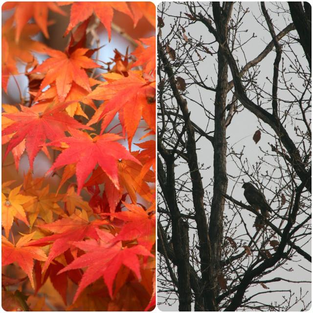 가을풍경(2)_20201116.jpg